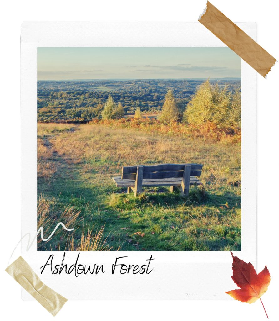 Bench at ashdown forest
